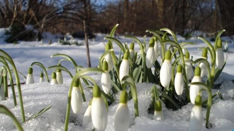 Погода в Санкт-Петербурге с 18 по 24 февраля 2019 на неделю: прогноз Гидрометцентра, какая будет температура воздуха, осадки